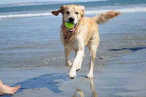 Approvata PDL Bozzetti sugli animali di compagnia in spiaggia